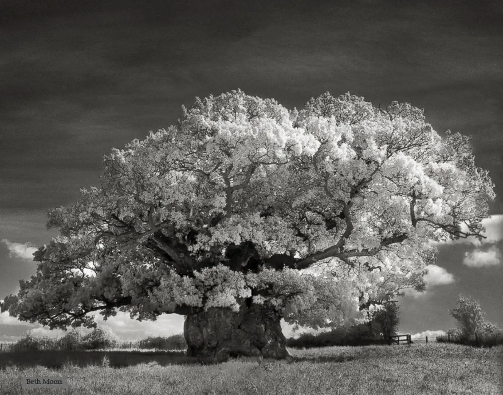 The Bowthorpe Oak, in Lincolnshire, England is thought to be England's oldest oak tree. Estimated to be over 1,000 years old, the Oak is in the Guinness Book of World Records.