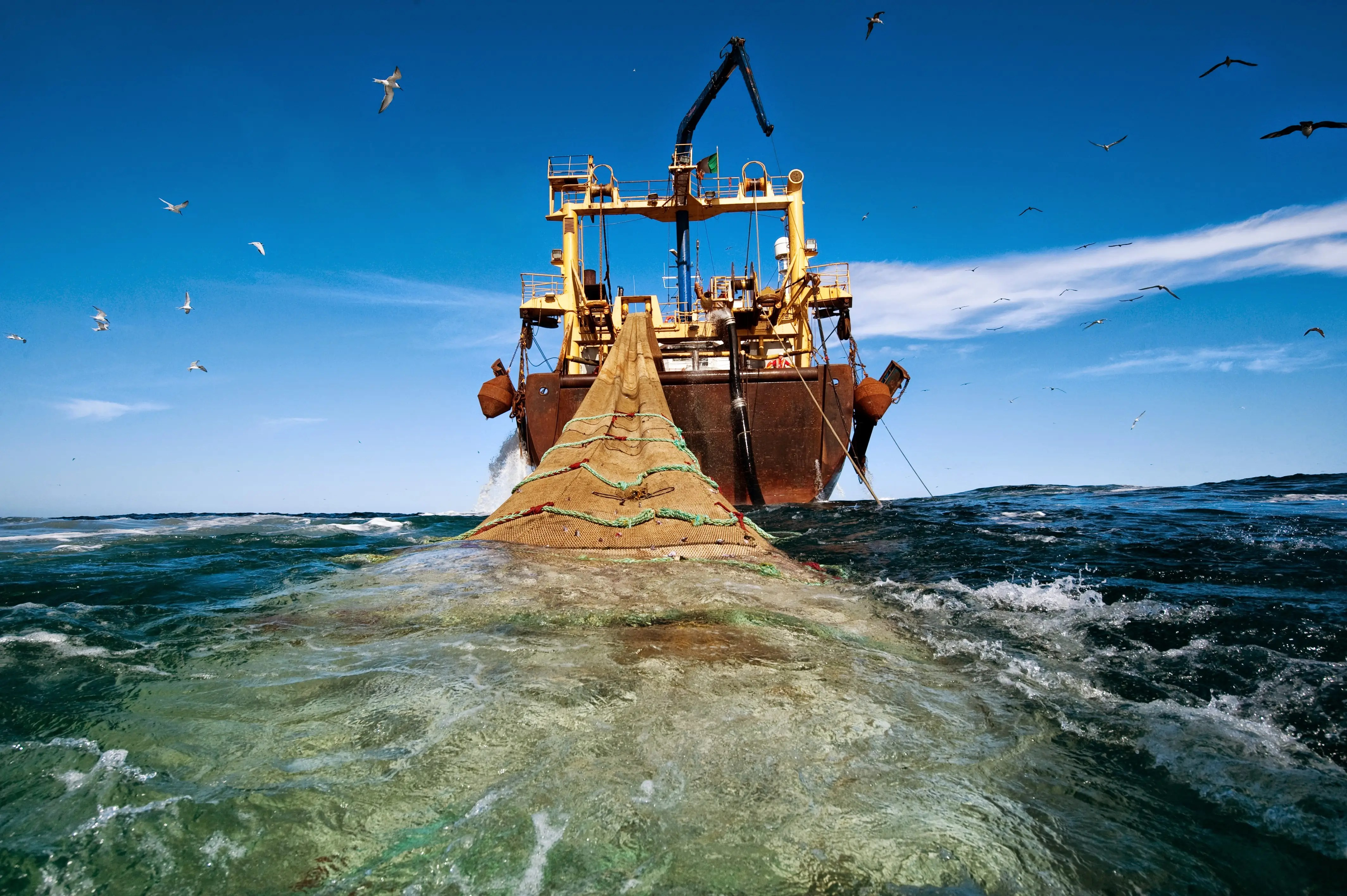 A 400-foot-long pelagic trawler pulls in a haul off the coast of Mauritania. The ever-growing demand for fish protein in the world diet, has created record catches in recent years.