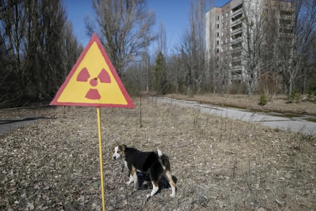 Reports have been made that although no human life is in Chernobyl, scours of animal life has since thrived near the disaster site.
