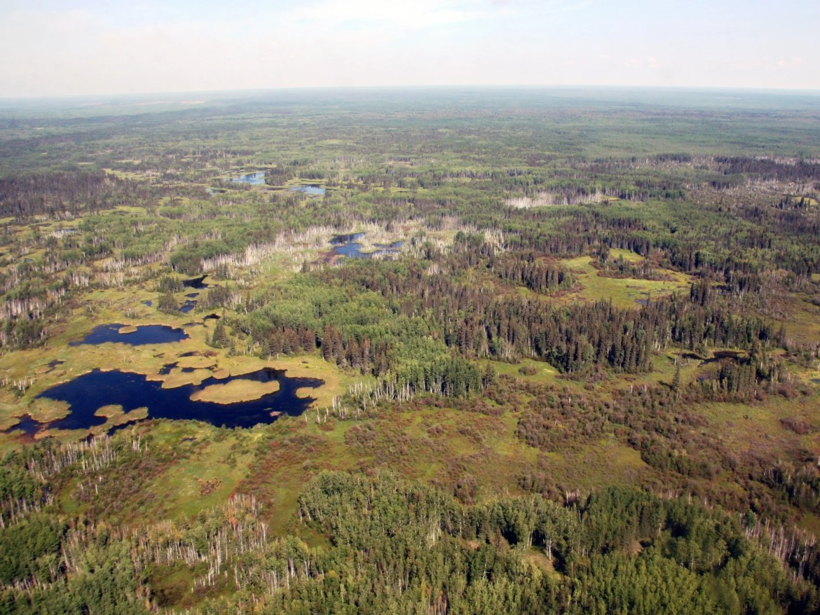 Critics also say restoring a piece of developed land to its native boreal forest condition, like this, is not realistic.