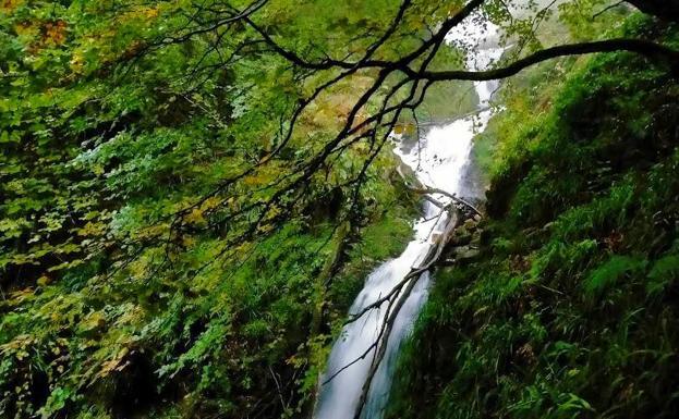 Ruta de la cascada del Xiblu por el Hayedo de Montegrande