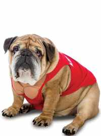 Dogs Cheerleader Costume. The coolest | Funidelia