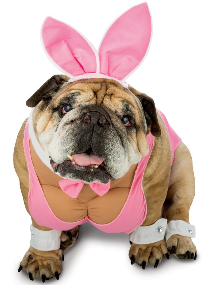 Dog's Playboy Bunny Costume