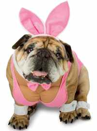 Dog's Playboy Bunny Costume