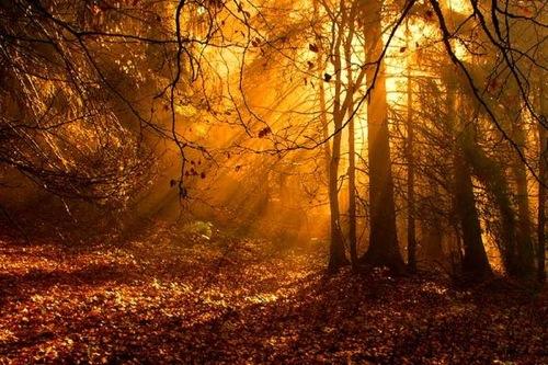 Sonic Fall November Wallpaper Paizo Com Forest Journey Mp3 Download