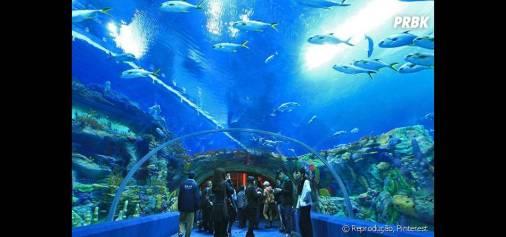 Aquarium of Western Australia é o maior aquário da Austrália e é bastante conhecido por esse túnel subterrâneo - Purebreak