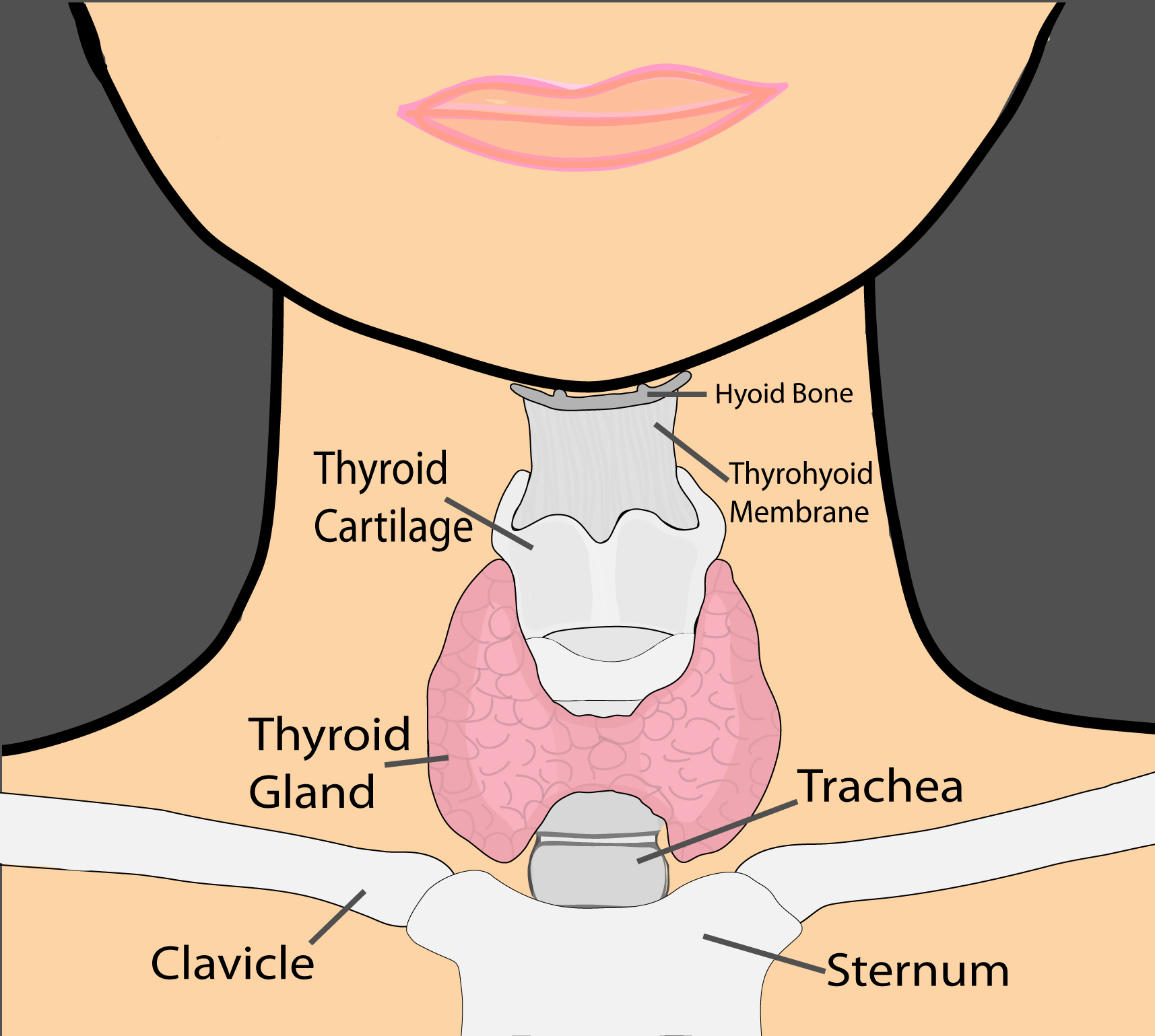 small resolution of thyroid diagram fixed color jpg