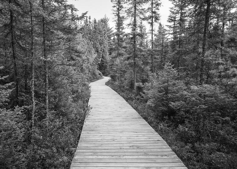 Spruce Bog Boardwalk