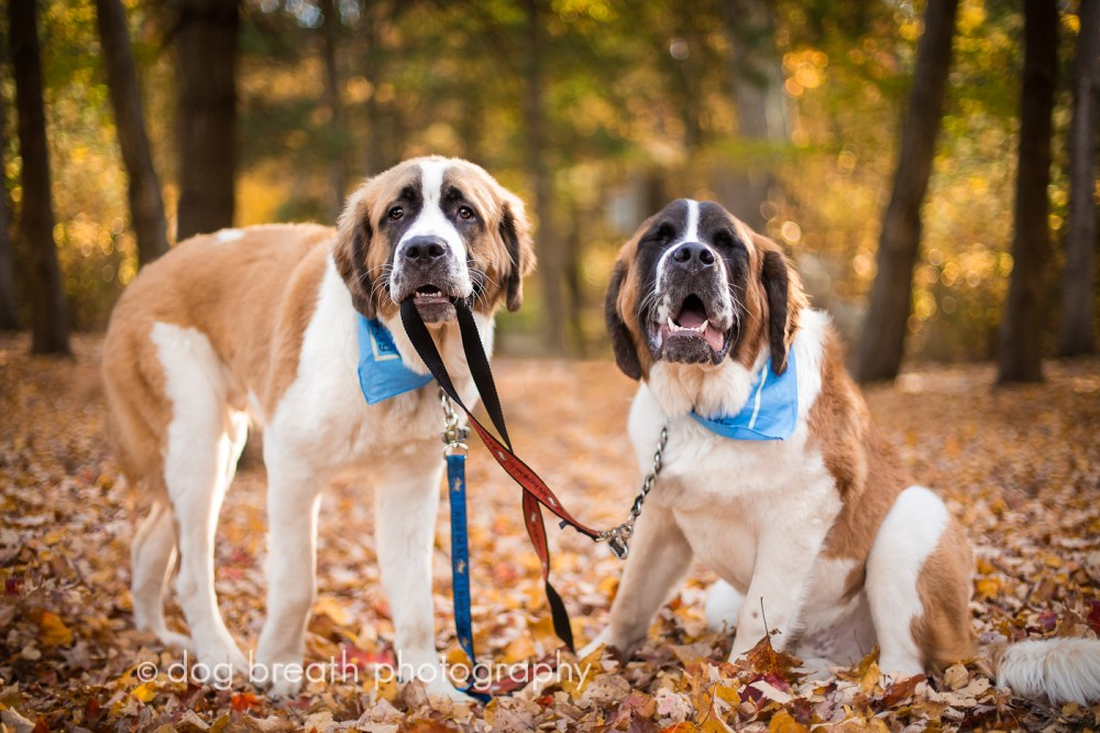 Image result for fall dog picture, dogs who are crazy about fall
