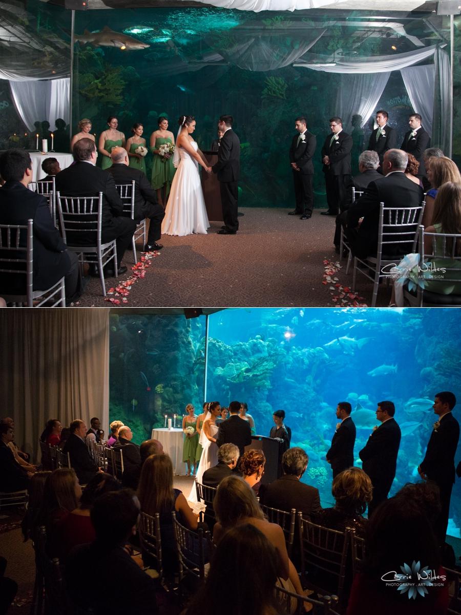 Caitlin Amp Mahir The Florida Aquarium Carrie Wildes