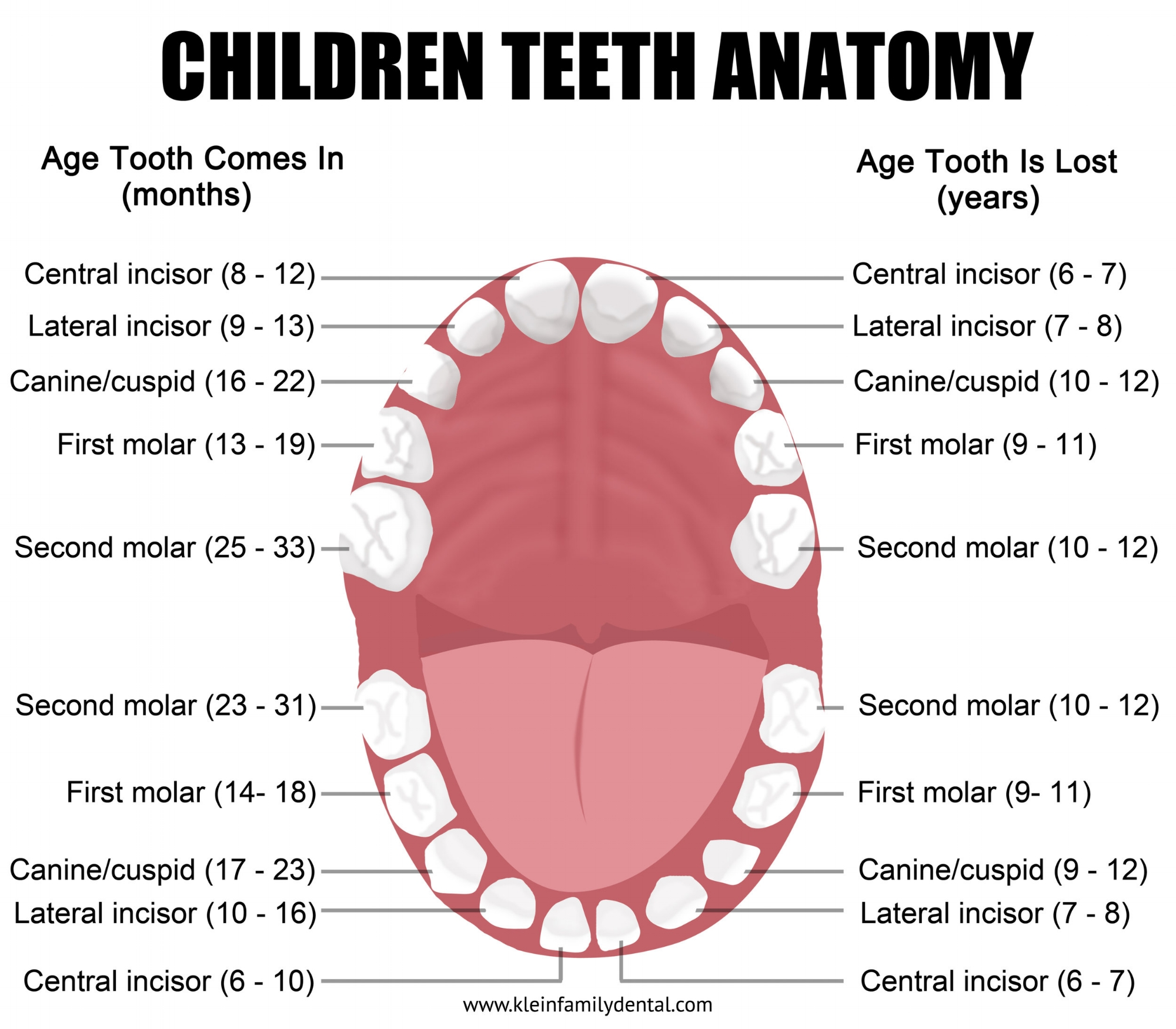 Click on this image to enlarge it into full view also pediatric tooth chart  klein family dental rh kleinfamilydental