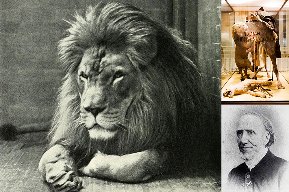Sultan the lion photo from here, Jules Verreaux portrait photo from here.