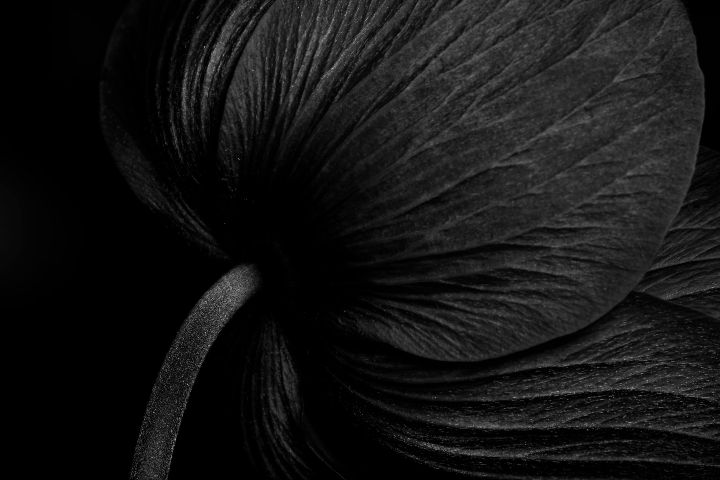 black white flower silhouettes