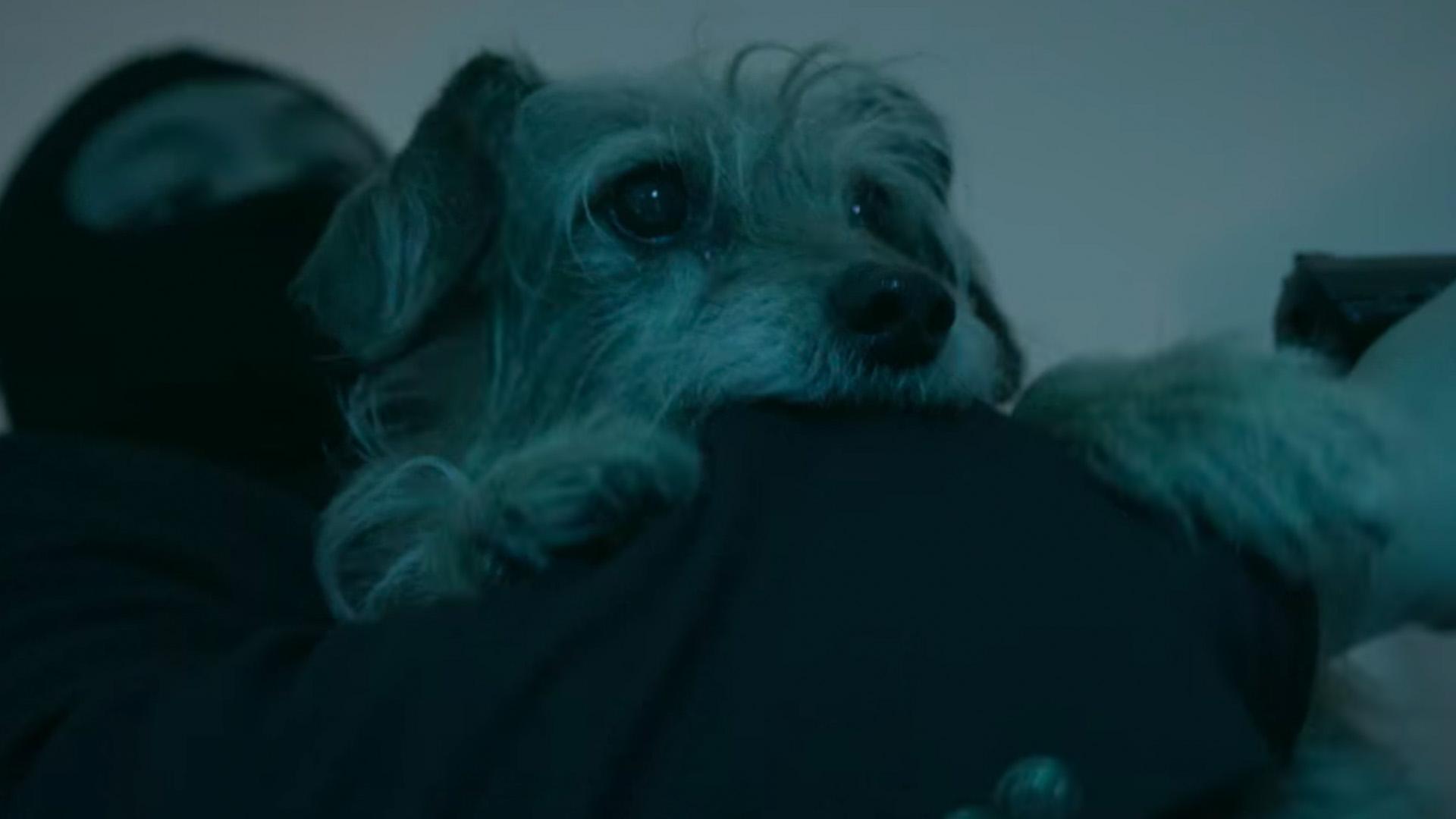 John Wicks Dog Gets Revenge and Racks Up the Headshots in DOG WICK Parody Video  GeekTyrant