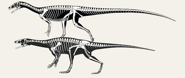 Scott Hartman's Skeletal Drawing.com