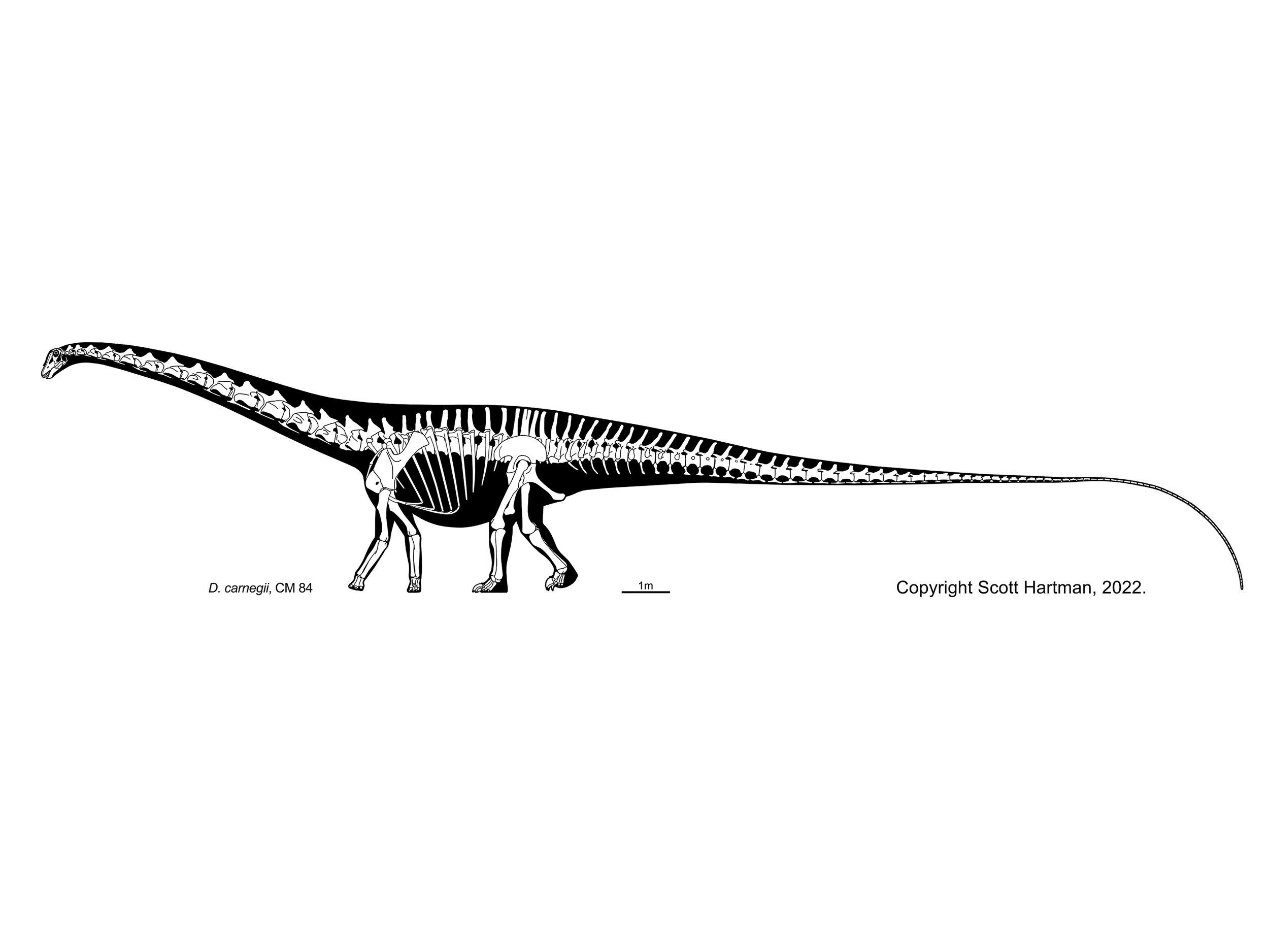 Sauropod Gallery Overhauled!Scott Hartman's Skeletal