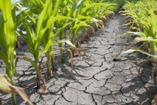 UK food security faces 'real threat' from international water shortages
