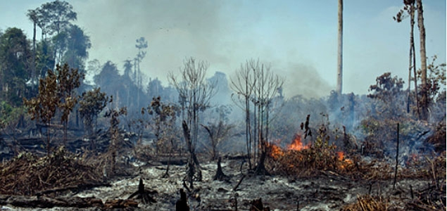 Open flames on dry tree branches in an area of recently deforested peatland in the PT Rokan Adiraya Plantation oil palm concession in Riau | Image credit: ©Ifansasti/Greenpeace