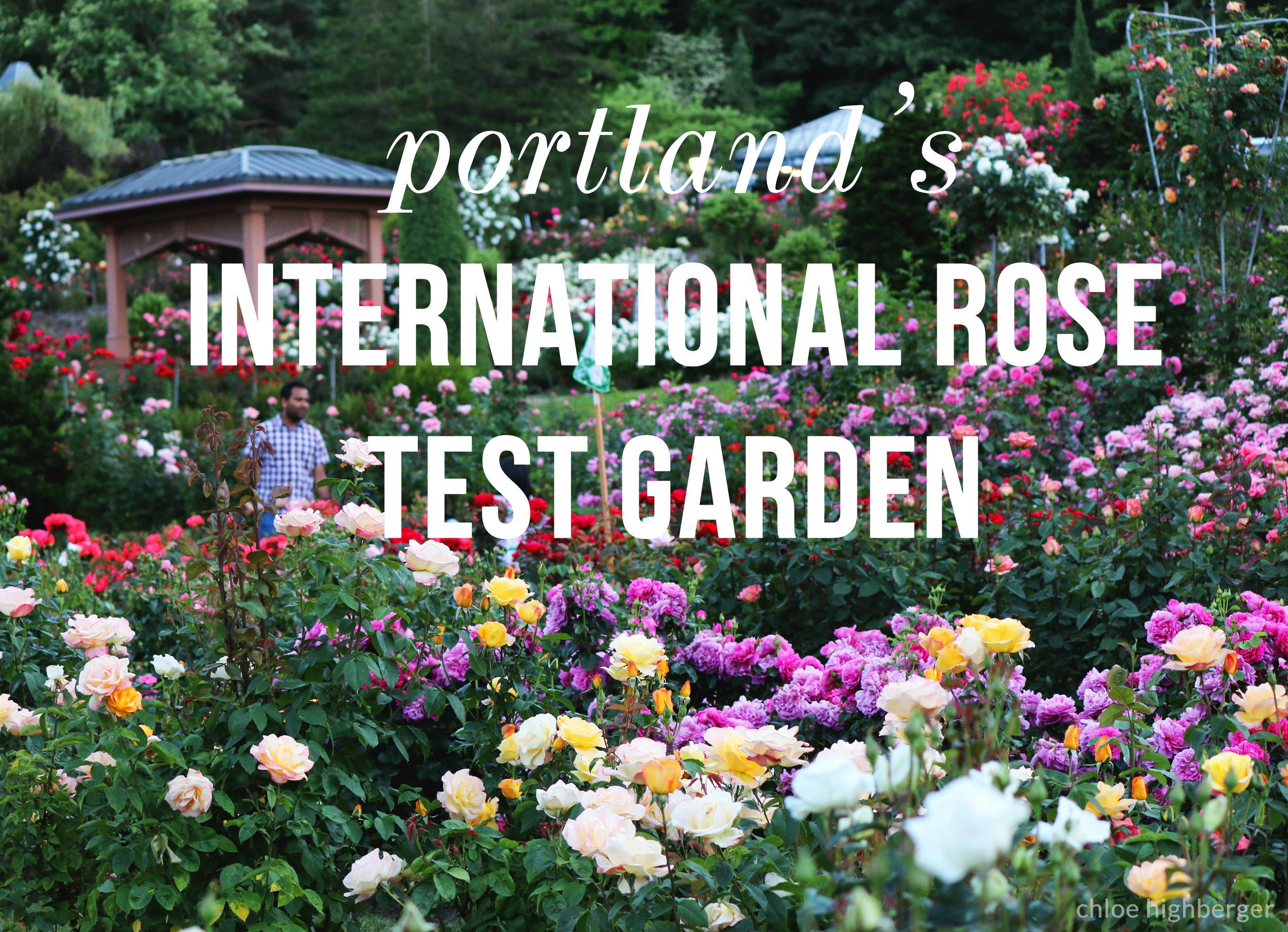 Pictures Of The International Rose Test Garden In Portland Oregon