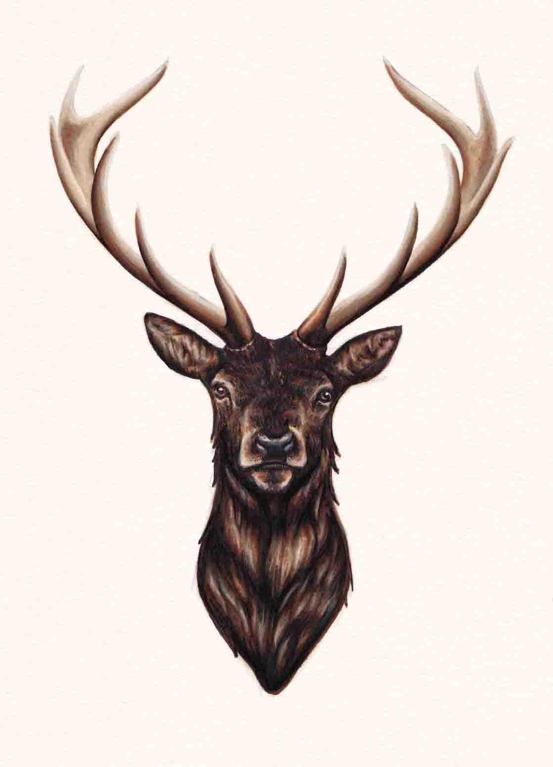 Stag Original Drawing Peter Carrington Illustration