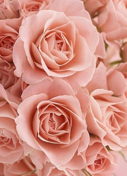 Color Crush Pale Rose  Franki Durbin