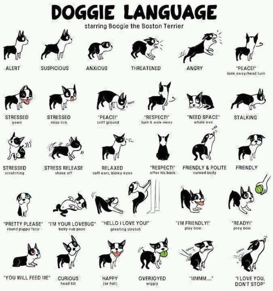 Handouts — Ruff Life Dog Training