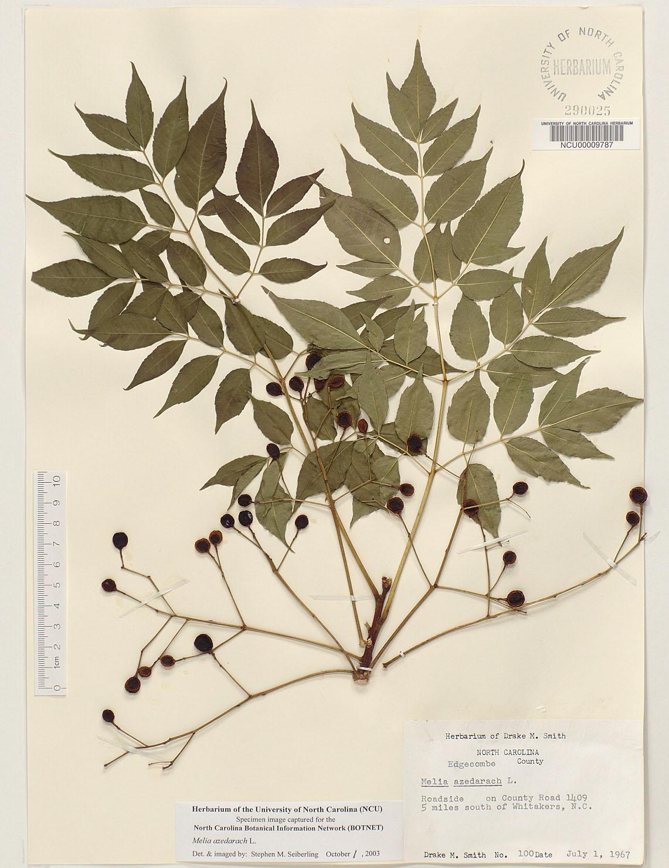 The Making Of An Herbarium — Bainbridge Conservation