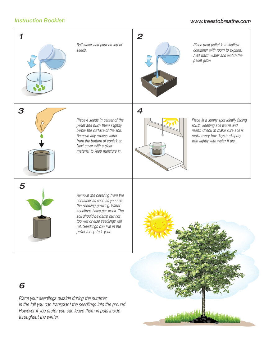 hight resolution of how to grow trees from seed