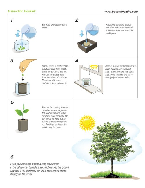 small resolution of how to grow trees from seed