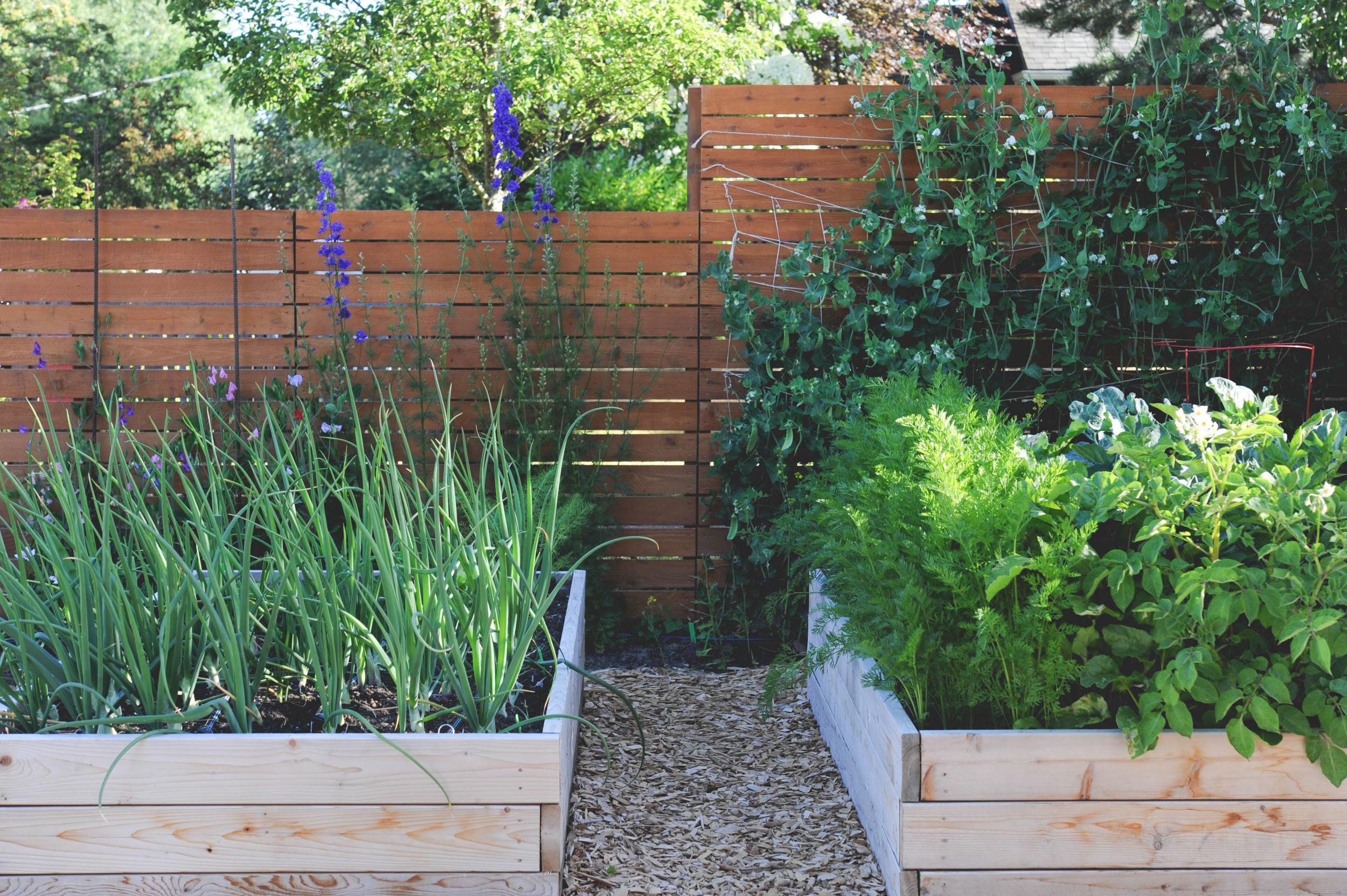 high yield vegetable gardening theresa loe podcast seattle urban farm co