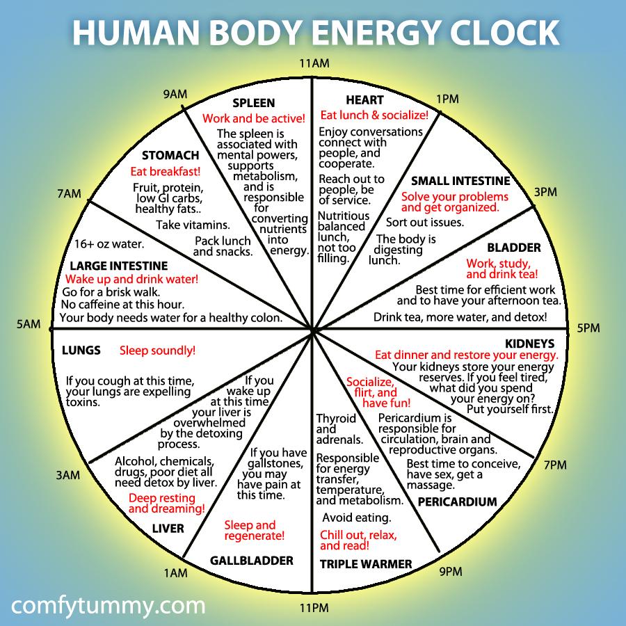 medium resolution of human body energy clock lijiang studio mechanical clock movement diagram body clock diagram