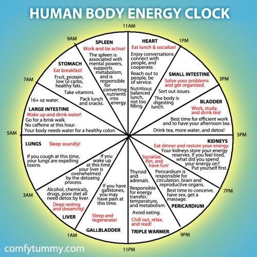 small resolution of human body energy clock lijiang studio mechanical clock movement diagram body clock diagram