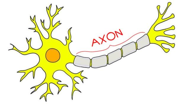 Image result for axon