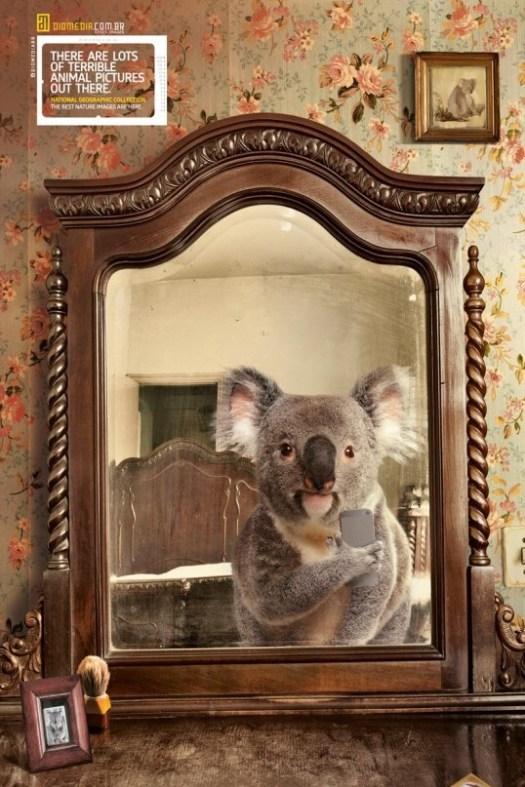 National Geographic presents animal selfies.