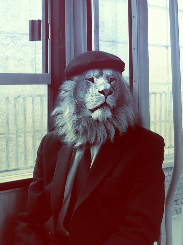 razorshapes: Christoph Meyer - Animals (2011) King of the Jungle