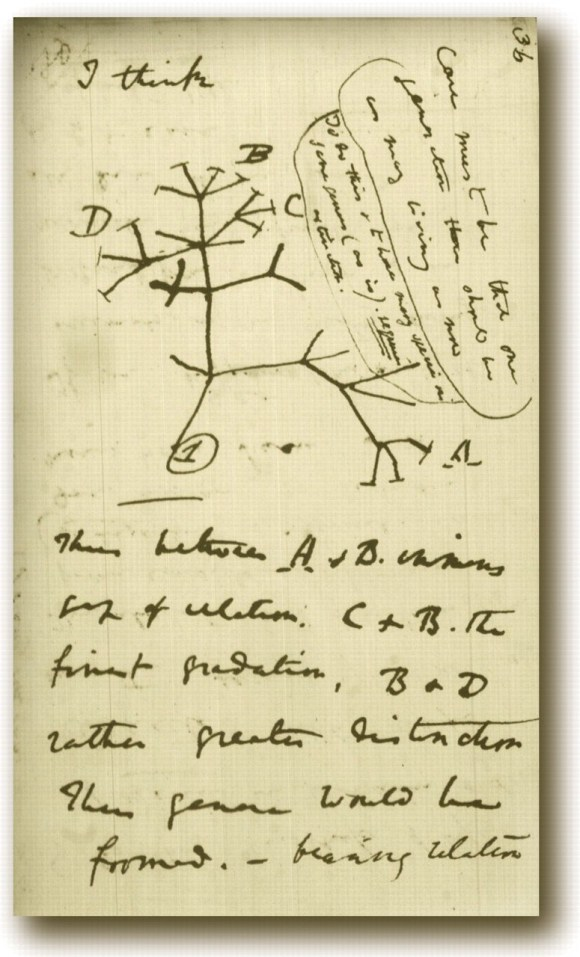 "Darwin's 1837 diagram of an evolutionary tree starts with ""I think…"" All it takes is a hunch, a guess, and the will to prove it true."