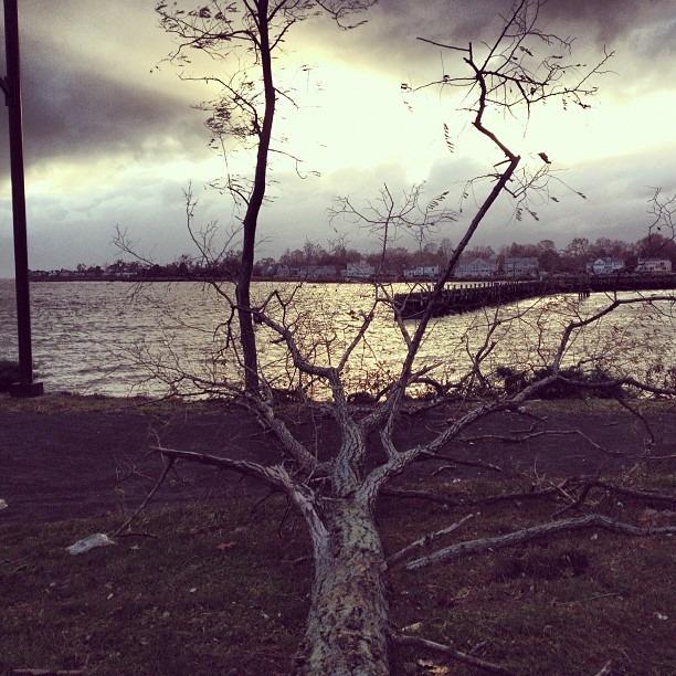 Tree of Life (at Kosciuszko Park)