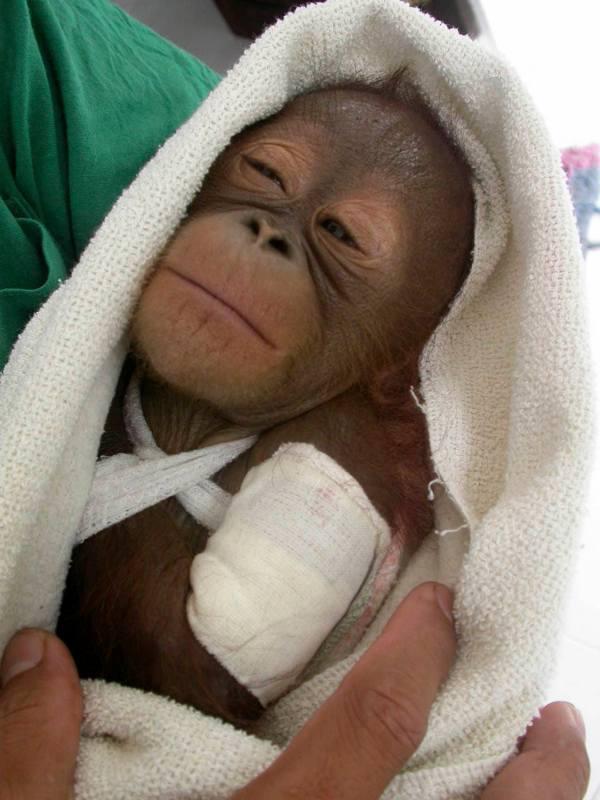 Sanctuaries World Ape Fund