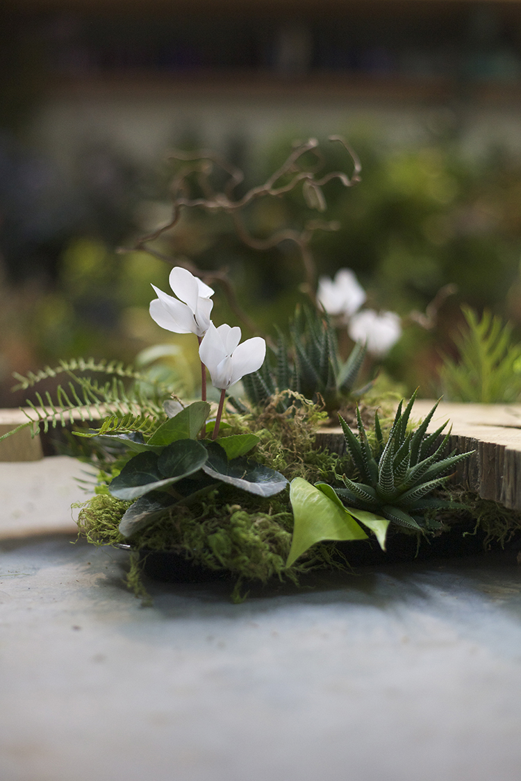 Floral Verde LLCwoodland and succulents