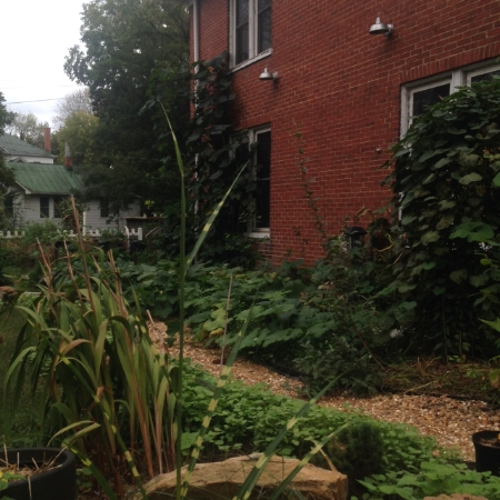 Side yard, looking a little jungle-y. It's all those squash and zucchini!
