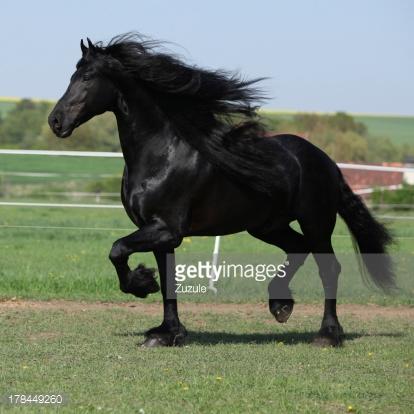 Black White Square Wallpaper 10 Amazing Black Stallion Horse Facts Karina Brez Jewelry