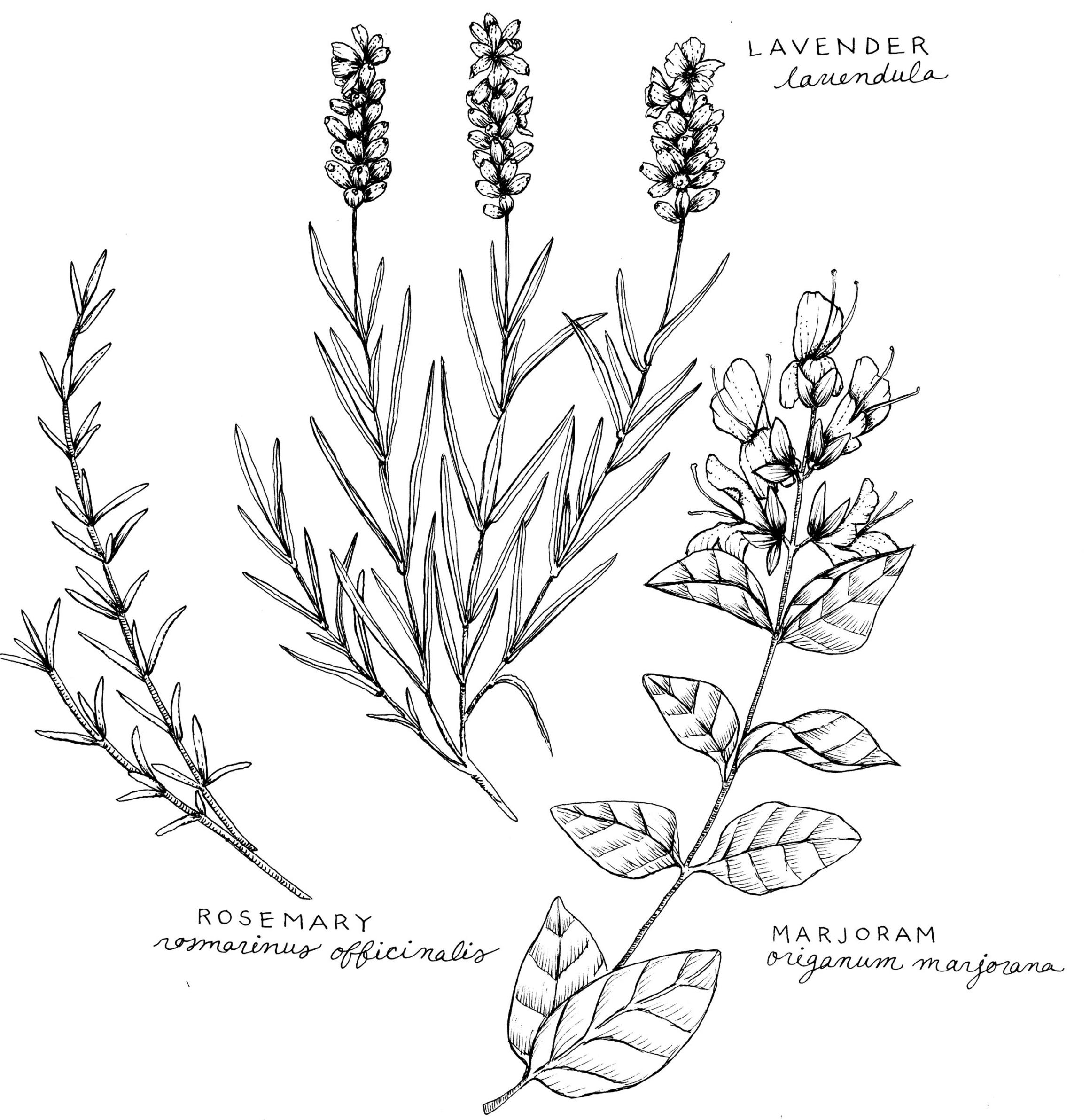 Savory Summer Herbal Spice Rub — Cambridge Naturals