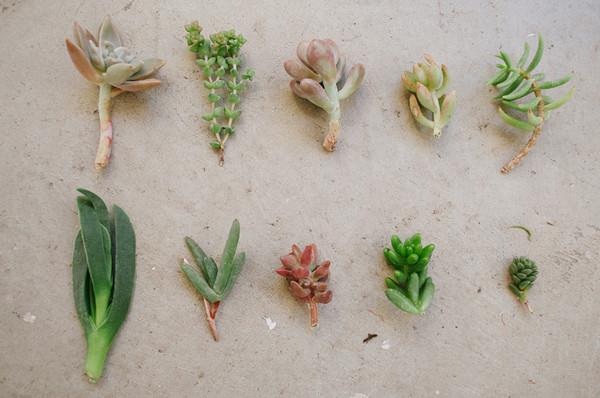 Succulents Stem Leaves Square