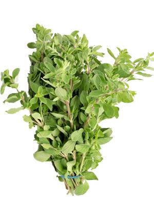 Fresh Herbs Goodness Gardens
