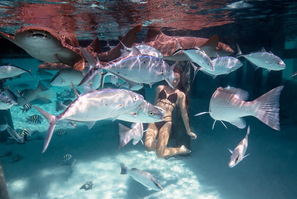 Compass Cay — Bahamas Girl