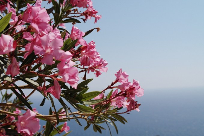 Plants and flowers from Sicily