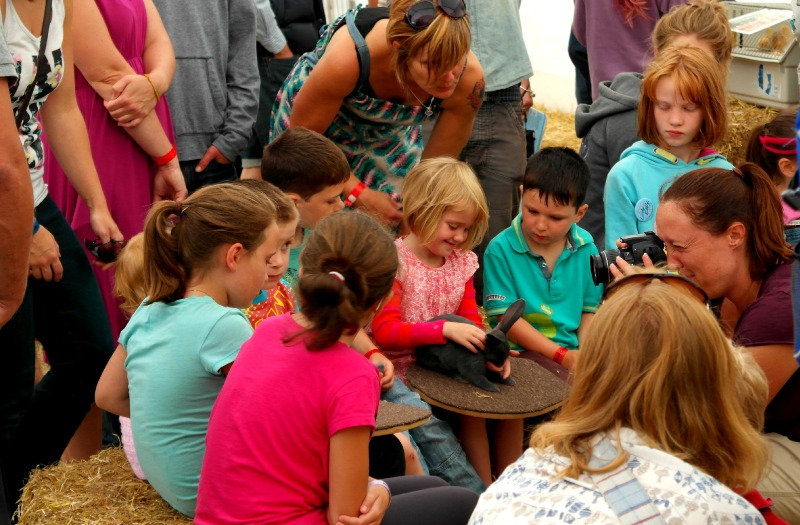 Small animal petting at The Big Feastival 2013