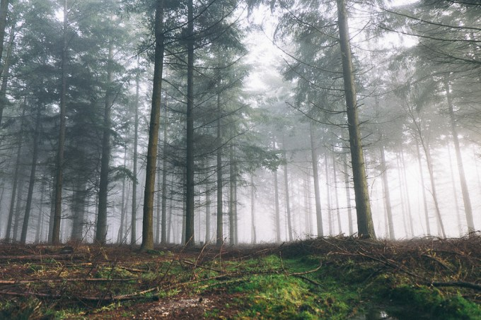 Foggy morning at Dibden Inclosure, New Forest
