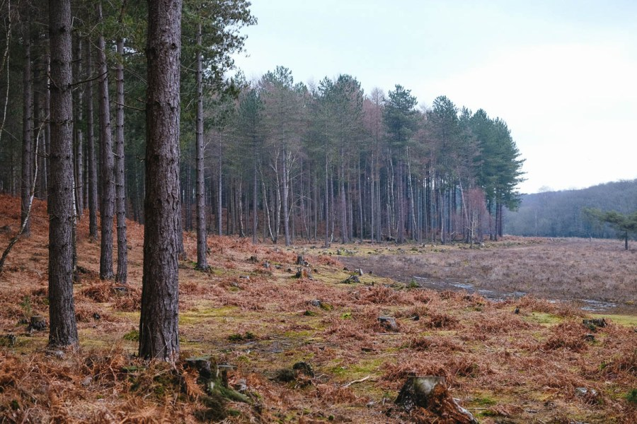 Nr Matley Wood, New Forest