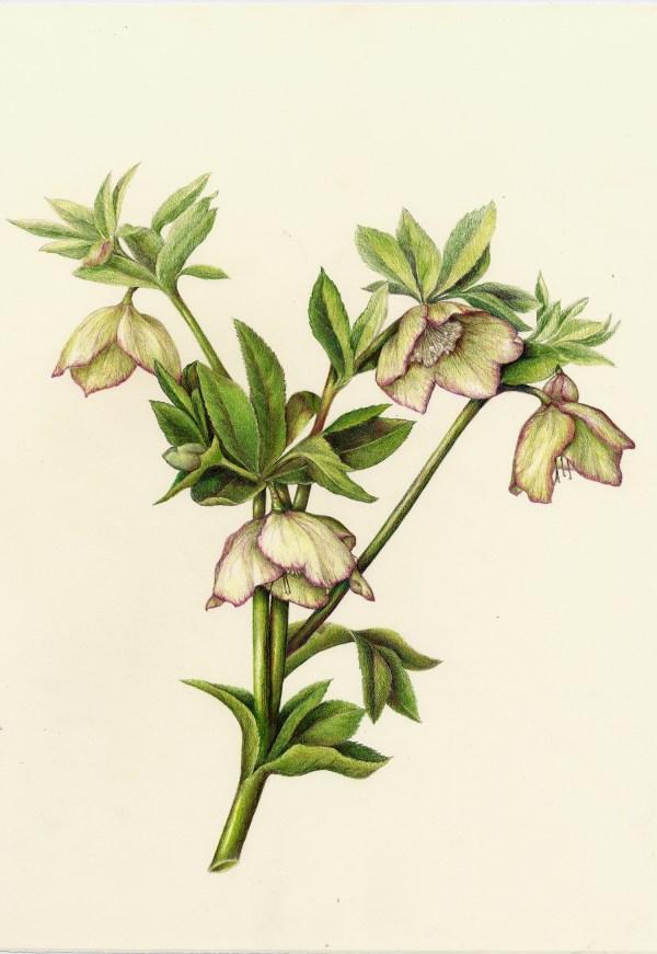 Flowers Full Botanical Artist & Illustrator